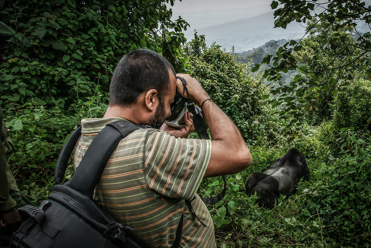 Close encounter with Chimanuka in D.R.Congo