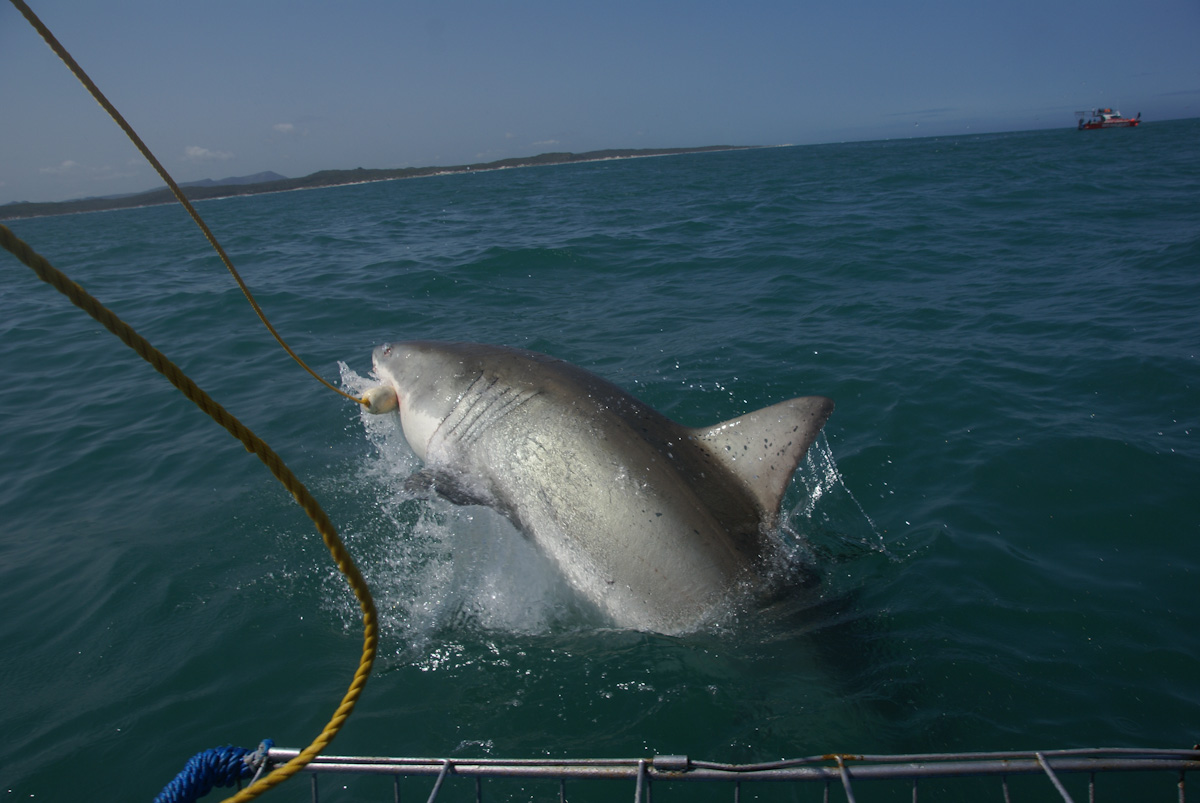 The view from my shark cage in South Africa