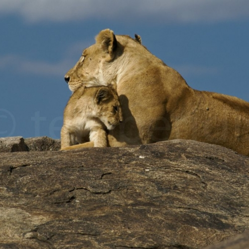 Sweet moments in Serengeti